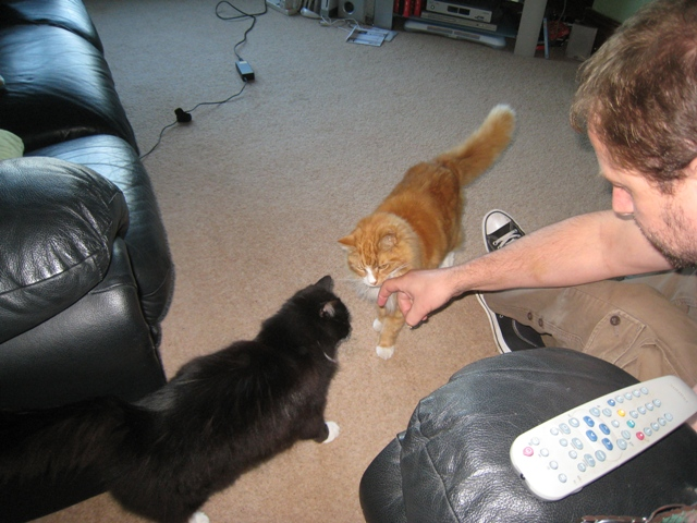 Spunky and Heffy consider whether Paul's finger is edible...