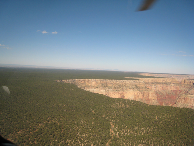 The Grand Canyon, starts abruptly in the middle of the Colorado Plateau and the surrounding forest