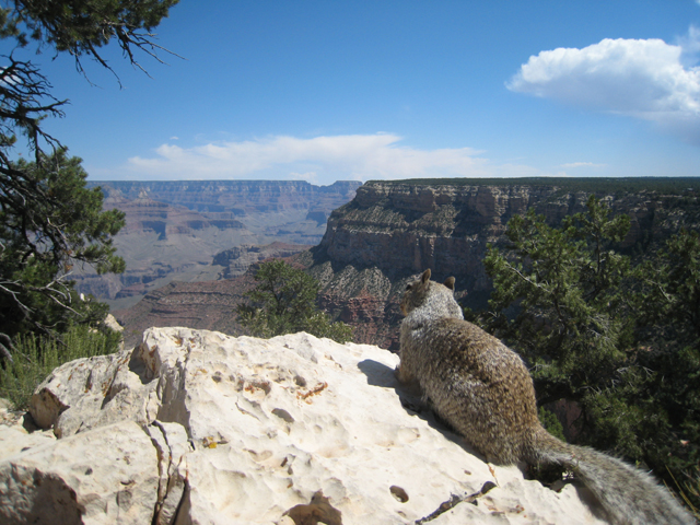 The view is so good, even the local squirrels stop to admire it…