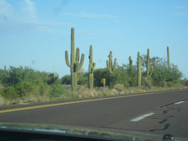 Classic cacti at the side of the highway on the way to Phoenix…